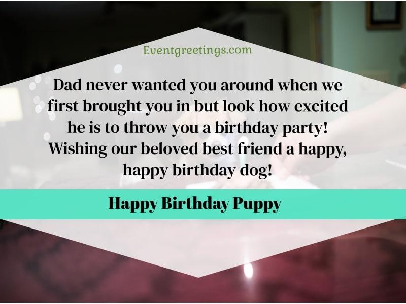 dog birthday wishes