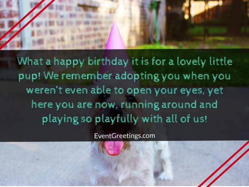 happy-birthday-dog-images