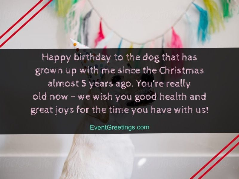 Happy Birthday Dog Images