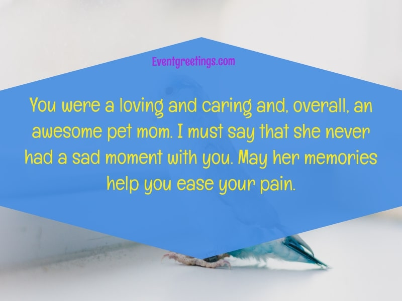 Sympathy quotes for Pet Loss